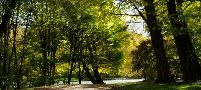 Beutiful park with trees and river